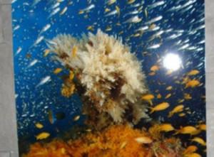 Aperitivo sotto il mare